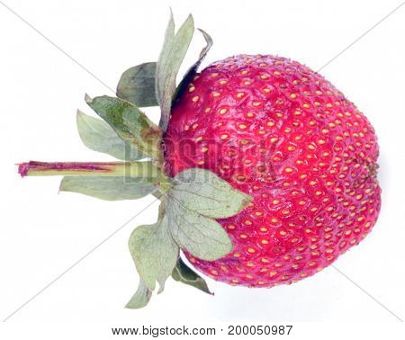 image of one raw red Strawberry at day