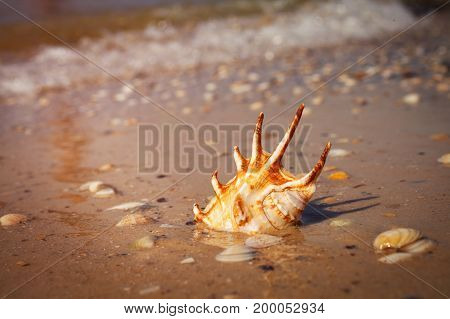 sea, summer, holidays and vacations - sea shell on sand. Summer beach with seawater background with space for text