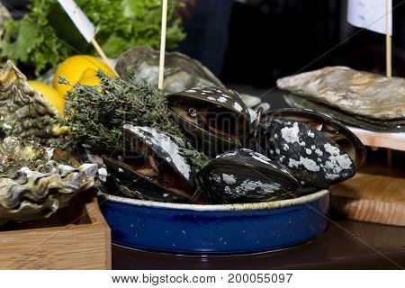 oysters live shellfish in the shell seafood food clam