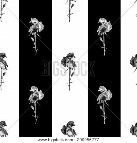 Vector seamless pattern with hybrid tea rose and black stripes. Graphic drawing pointillism technique. Botanical natural collection. Black and white floral illustration