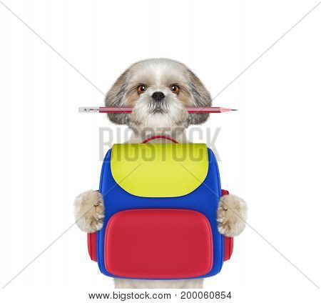 dog obedience school - shitzu with bag isolated on white background