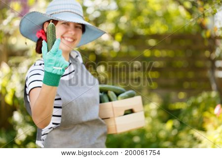 Farmer in hat holds cucumber