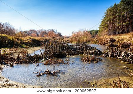 The swamp, covered with mud and dried grass