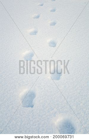 Footprints in the snow in winter day .