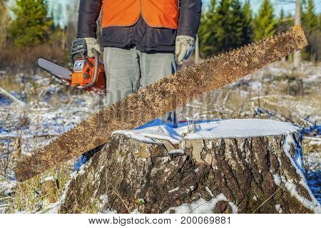 Old hand saw in stump with worker with chainsaw in background