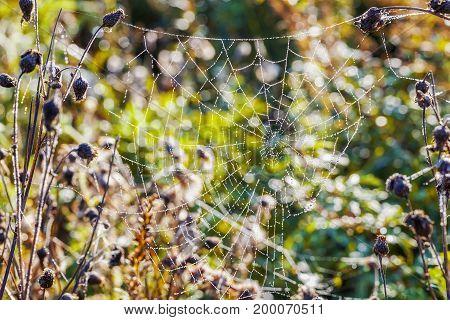 Spider Web,cobweb in meadow in autumn day