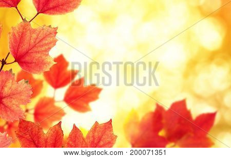 autumn leaves on a blurred background
