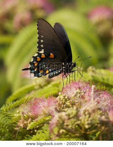 Butterfly feeding on a pink flower