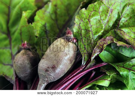 Fresh beetroot with leaves closeup. Summer vegetables.