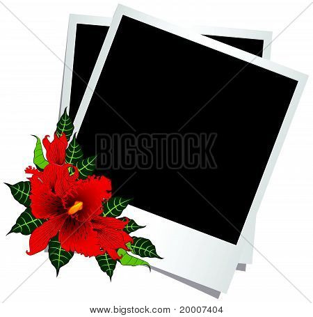 Beautiful photo frames with flowers