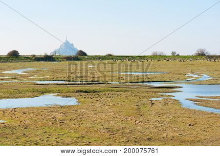 Mont Saint-michel and sheeps in a meadow, Normandy, France