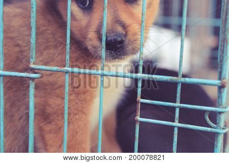 Puppy Dogs In The Cage In Adoptation Center Of Bali Island, Indonesia.