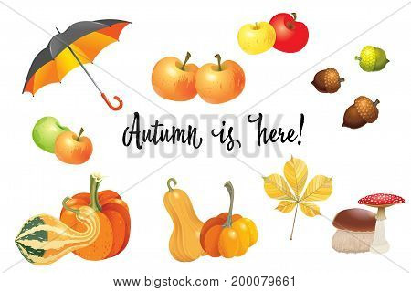 Set of autumn objects. Pumpkins different types mushrooms umbrella apples and fall leaves. Vector illustration
