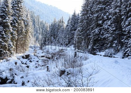 Wintery Snowy Path With Trees And Small River In Stubai Alps Mountains, Austria