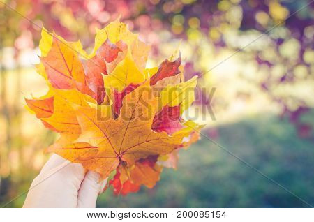 Bouquet of colorful autumn maple fallen leaves in woman hand. Bright red and orange fall scene background. Selective focus.
