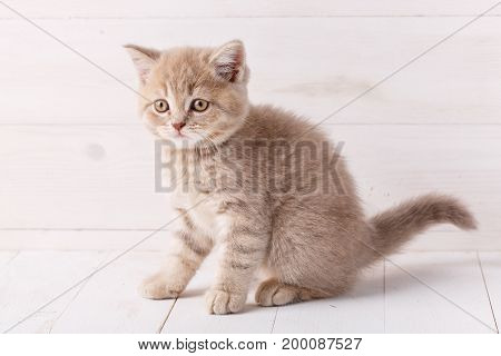 Cat, young and kitten concept -little kitten on a wooden background