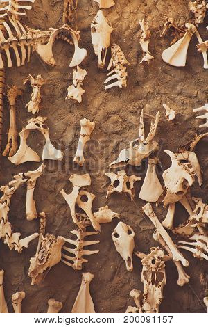 Archaeological excavation, detail of an ancient exploration, animal and bird bones