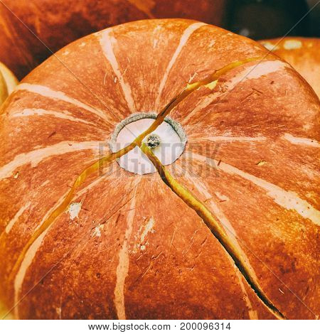 Close-up Ripe orange pumpkin with crack, vintage colours. Rustic fall background