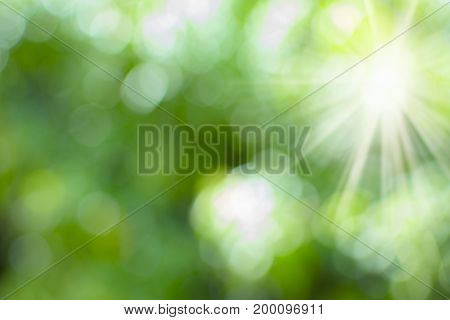 Abstract green blurred background. Abstract Nature background.