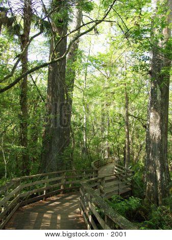 Florida Cypress Preserve 2402