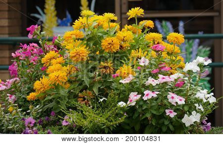 Profusion of colorful flowers by the roadside