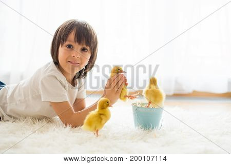 Cute Little Boy With Duckling Springtime, Playing Together