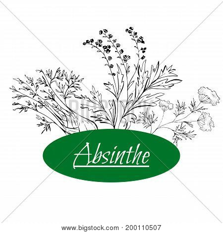 Absinthe Ingredients. Grand Wormwood, Green Anise, Sweet Fennel. Hand Draw
