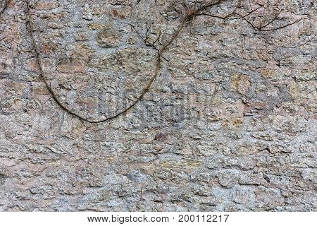 Background Stone wall with creeper from the top