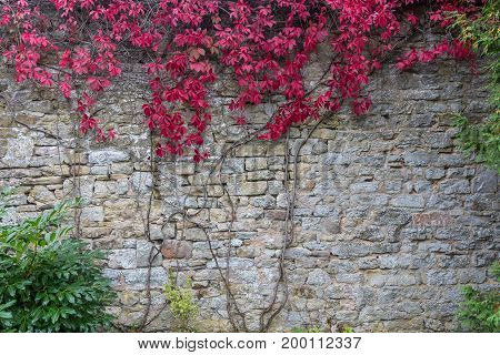 Background stone wall textured with plants overgrown