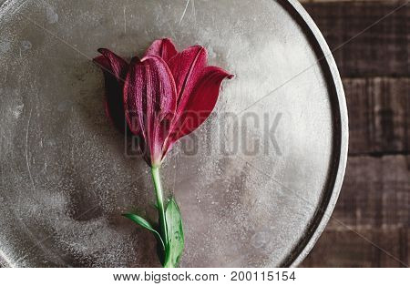 Red Lily Flowers On Metal Tray On Wooden Background. Beautiful Bloom On Rustic Wood Backdrop. Space