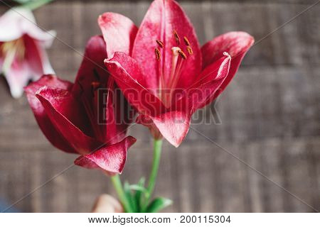Red Lily Flower On Rustic Wooden Background. Gorgeous Bloom On Rustic Wood Backdrop. Space For Text.