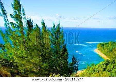 Lush green tropical conifer pine trees overlooking Kee Beach taken at the Napali Coast in Kauai, HI