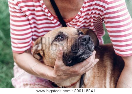 Woman Hugging Dog, Cute Big Eyes Dog Portrait, Puppy Face Close-up, Friendly Pet Up For Adoption Con