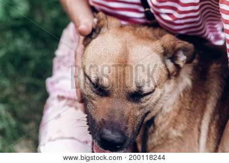 Cute Dog Bonding With New Owner, Happy Brown Dog Hugging Woman Close-up, Best Friends In The Park, A