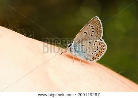 Beautiful little blue butterfly sitting on a lady's hand