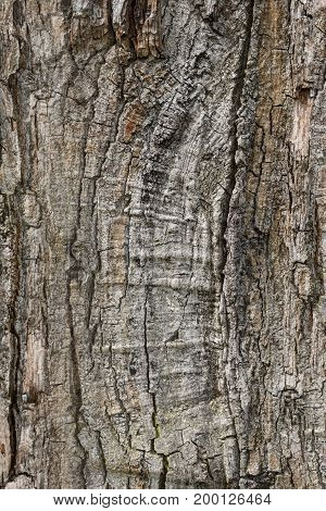 beautiful texture of the tree bark as background