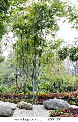 the bamboo groves and courtyard