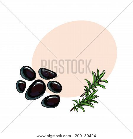 Black basalt massage stones and rosemary herbs, spa salon decoration elements, sketch vector illustration with space for text. Realistic hand drawing of basalt stones for hot stone massage in salon