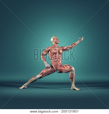 Man performs ground exercises. The muscular system. This is a 3d render illustration