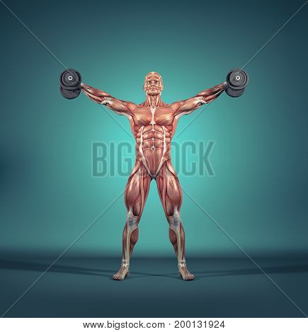 Sportsman raise small dumbbells - weights. The muscular system. This is a 3d render illustration
