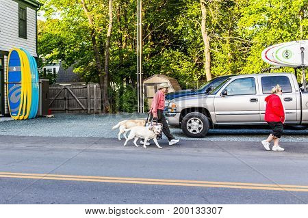 Bar Harbor USA - June 8 2017: Happy people crossing sidewalk street in downtown village in summer on main road with dogs