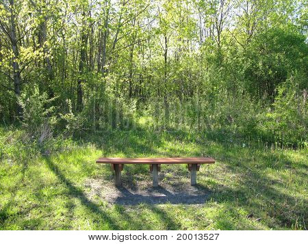 Spring Time and Bench Area in the Forest Preserve