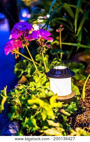 Illuminated Lantern Lamp At Night By Pink Geranium Pelargonium Flowers In Garden