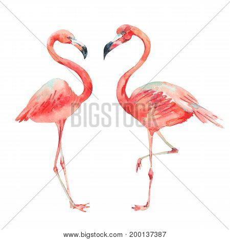 Watercolor set of vintage tropical natural elements. Exotic pink flamingo bright classic nature collection isolated on white background.