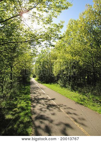 Spring Time along the bike path in the forest