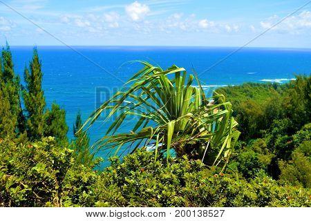 Lush green plants overlooking tropical Kee Beach taken in Kauai, HI
