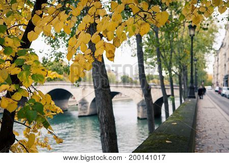 Autumn yellow leaves on the trees, overlooking the waterfront of the city, Paris