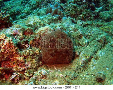 Stony corals of the South-Chinese sea
