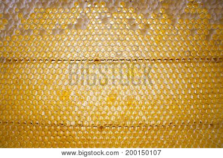 Fresh storehouse artificial wax for bees wax for honeycombs and frames frame with wax from a beehive on a bee apiary