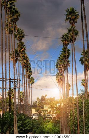 Palm Trees On Residential Street